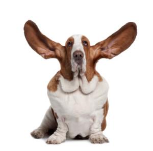 Listen - Dog